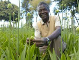 First grants awarded to drive African business